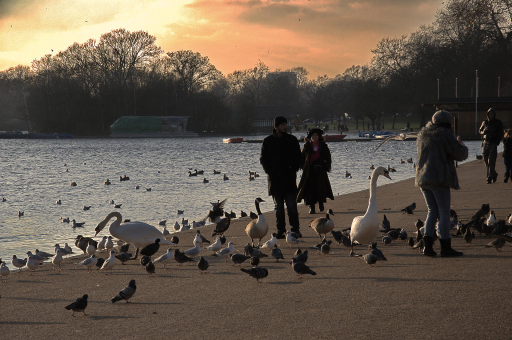 Hyde Park, the Geese and the Sunset, London